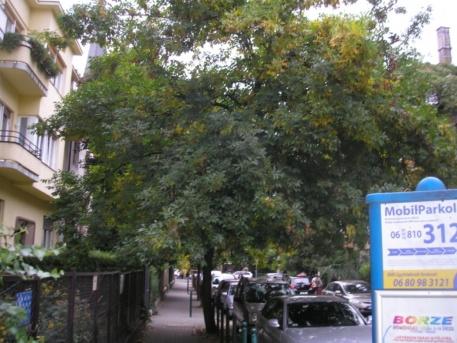 Poloskát termő fa