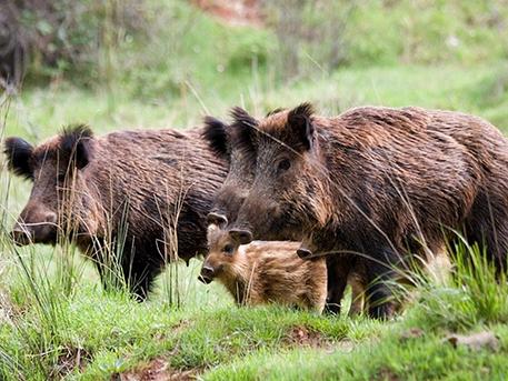 A kép csak illusztráció, forrás: Erdőkertvad