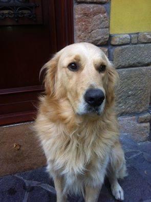 Brandy, az elrabolt kutya