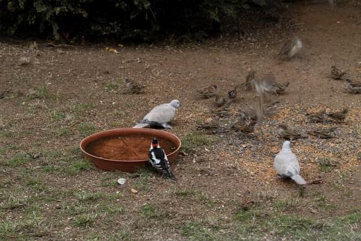 Vizet és eleséget is biztosítsunk a madaraknak (fotó: Orbán Zoltán)